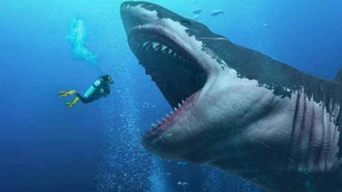 """Đánh bại """"cá mập""""!"""