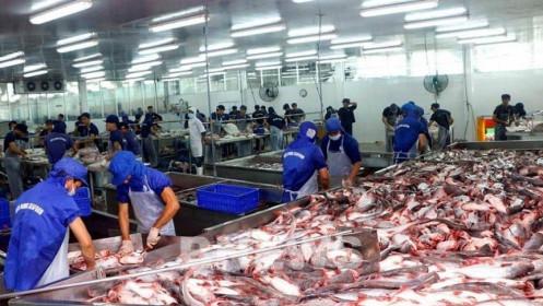 Ngành cá tra lại đối mặt thiếu nguồn cung cục bộ