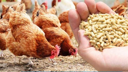 Choáng váng với giá thức ăn chăn nuôi tăng phi mã
