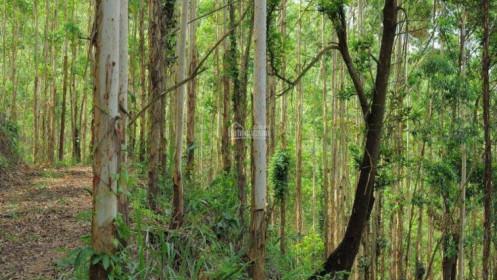 """Đầu tư đất rừng muốn mua thì dễ, muốn """"nhả"""" không dễ"""