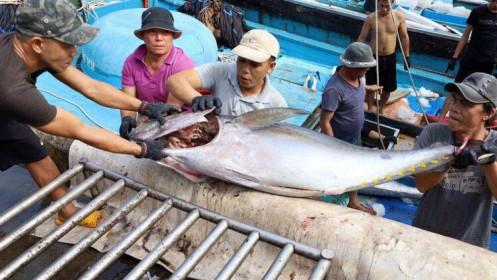 Việt Nam vượt Thái Lan thành nguồn cung cá ngừ lớn nhất cho thị trường Israel