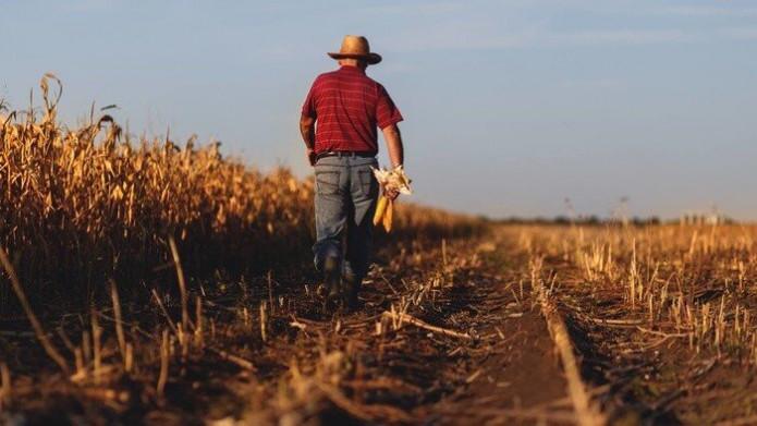 Mặc dù được ông Trump 'giải cứu', nông dân Mỹ vẫn khốn đốn vì thương chiến