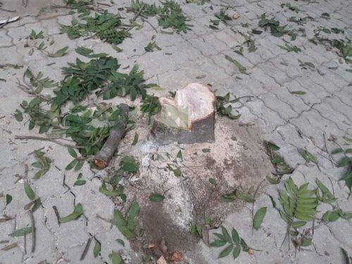 Hà Nội: Truy tìm các đối tượng chặt hạ cây xanh trong đêm