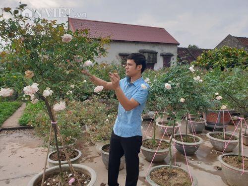Ninh Bình: Trồng hoa hồng cổ bán Tết, 9X bỏ túi trăm triệu