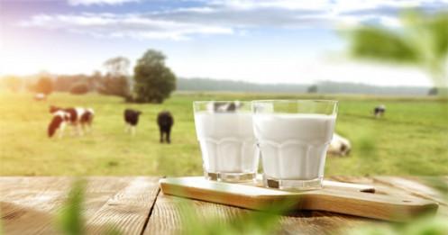Dự báo không lạc quan của ngành sữa năm 2020