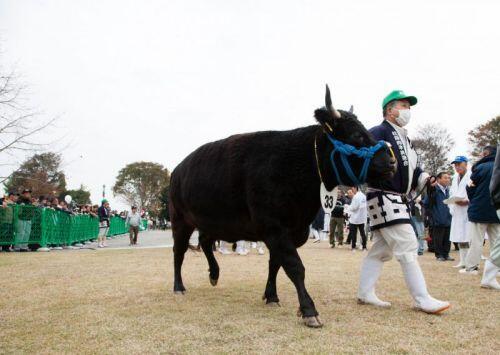Thịt bò đắt nhất thế giới, gần 12 triệu/kg có tiền chưa chắc đã ăn được