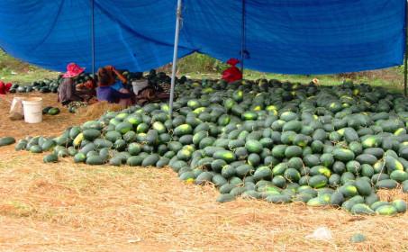 Khơi thông thị trường xuất khẩu trong lúc khống chế dịch Corona