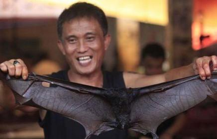 Indonesia: Hàng loạt nhà hàng ngừng bán món đặc sản dơi hầm vì virus corona