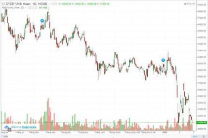 Cổ phiếu VHC có còn cơ hội phục hồi?