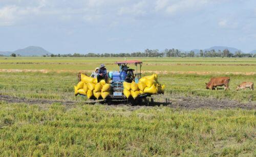 """An Giang kêu khó cho doanh nghiệp khi """"nghẽn"""" hơn 82.000 tấn gạo"""
