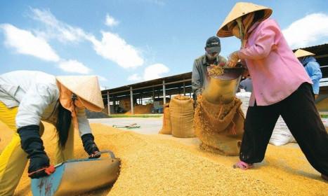 Bộ Công Thương chốt đề xuất xuất khẩu 400.000 tấn gạo trong tháng 4/2020