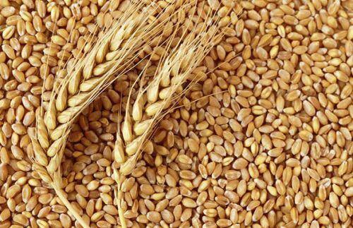Vì sao giá gạo thế giới tăng chạm đỉnh kể từ năm 2013?