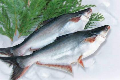 Doanh nghiệp cá tra đặt kế hoạch giảm, lãi quý I lao dốc