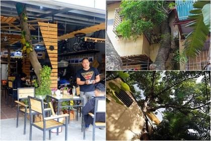 """Độc đáo những ngôi nhà cây mọc """"xuyên mái"""" ở Hà Nội"""
