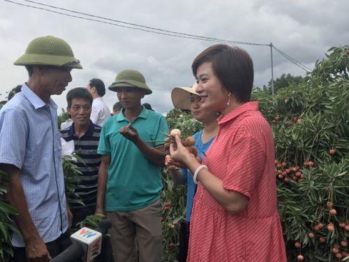 Hàng trăm thương lái Trung Quốc chực chờ, đếm ngày sang Việt Nam mua vải