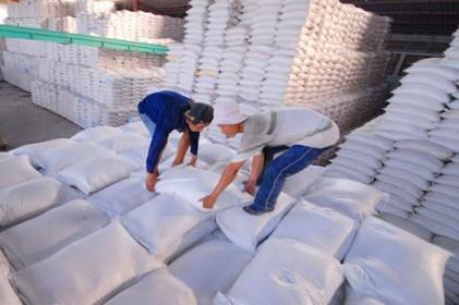 Gạo Việt 'so găng' với Thái Lan để giành đơn hàng từ Philippines