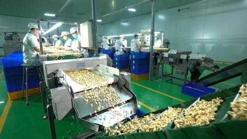 Thời cơ mới cho xuất khẩu điều từ Hiệp định EVFTA