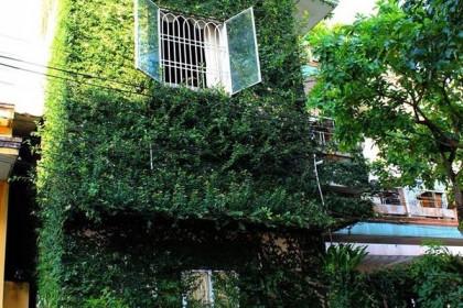 Độc đáo nhà 3 tầng phủ kín cây xanh của dị nhân chơi cây nổi tiếng
