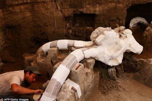 Phát hiện hóa thạch voi Ma   mút vạn năm tuổi dưới lòng đường