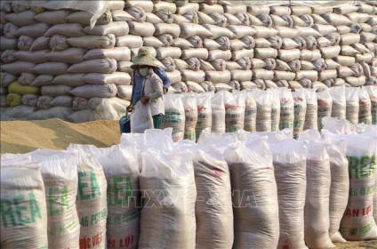 Đã mua và nhập kho 83,5% lượng gạo dự trữ