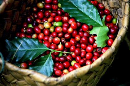 Giá cà phê hôm nay 16/7: Thị trường trong nước và thế giới nhích tăng nhẹ