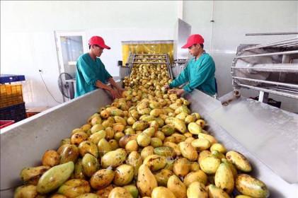 Hiệp định EVFTA: Tăng chất lượng và xây dựng thương hiệu cho nông sản Việt
