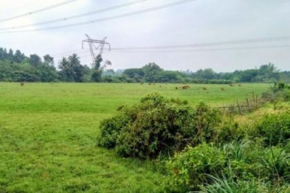 Đà Nẵng: Đất ruộng hoang hóa do dự án 'treo'