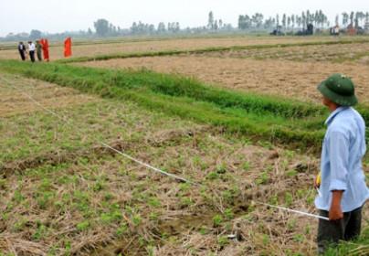 Điều kiện nhận chuyển nhượng đất lúa