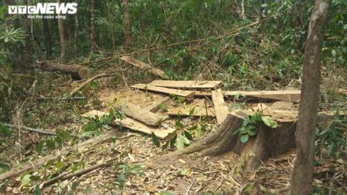 Bắt tạm giam Chủ tịch Hội đồng thành viên công ty phá 3 ha rừng