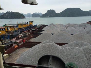 Ách tắc hàng hóa tại cảng Cẩm Phả: Hàng loạt doanh nghiệp cầu cứu Chính phủ