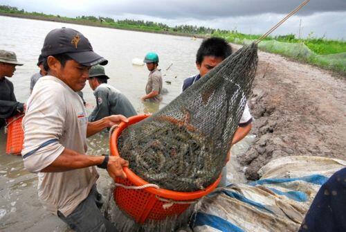 Giải mã thành công của con tôm Việt Nam và mục tiêu xuất khẩu 4 tỷ USD năm 2021