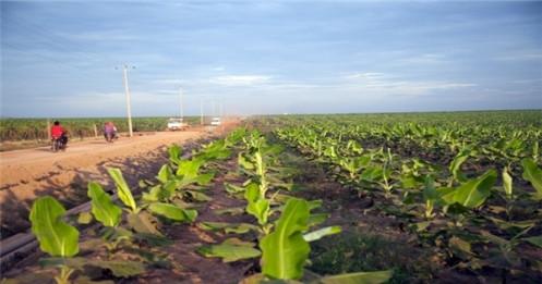 Thagrico có thể niêm yết và trở thành công ty nông nghiệp lớn nhất trên sàn chứng khoán