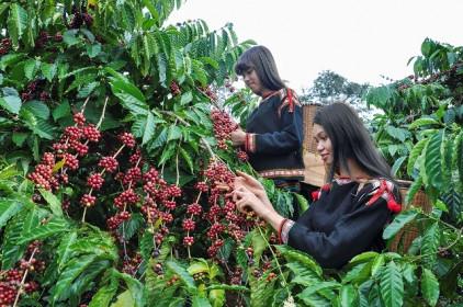 Giá cà phê hôm nay 11/1: Doanh nghiệp Việt thích ứng trong đại dịch, tin tưởng triển vọng năm 2021