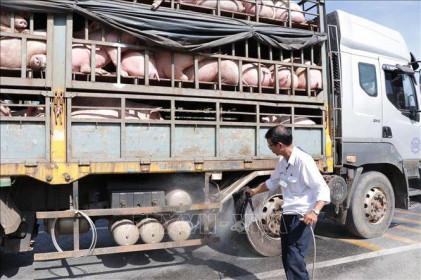 Kiểm soát vận chuyển lợn qua biên giới
