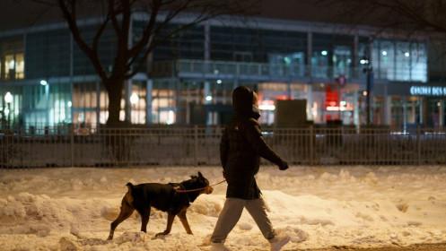 Tránh lệnh giới nghiêm chống Covid-19, vợ dắt chồng 'giả làm chó' đi dạo