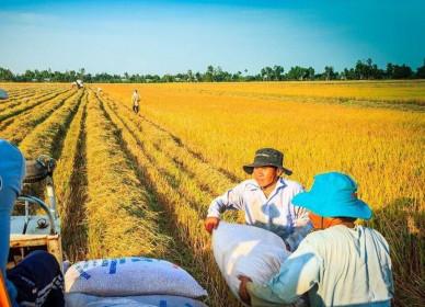 Thị trường nào nhập 1 tỷ USD gạo Việt?