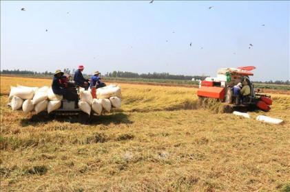Thị trường nông sản tuần qua: Giá lúa tăng nhẹ