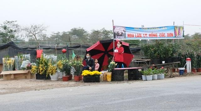 [Ảnh] Vắng người mua, giá hoa Tết tại huyện Mê Linh giảm gần 50%