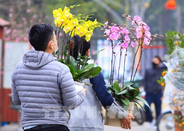Thị trường hoa cây cảnh Tết đìu hiu: Tiểu thương thấp thỏm lo âu