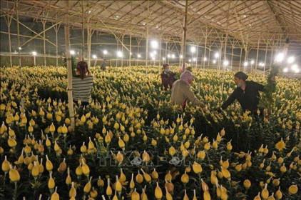 Liên kết sản xuất, tiêu thụ nông sản ứng dụng công nghệ cao