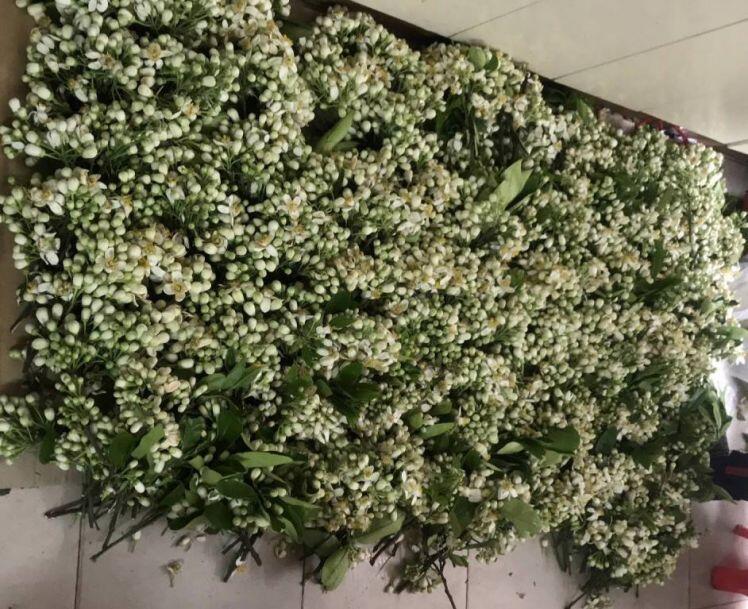 Hoa bưởi đầu mùa giá 'chát', chủ sạp bỏ quả bán hàng chục cân hoa, thu tiền triệu mỗi ngày