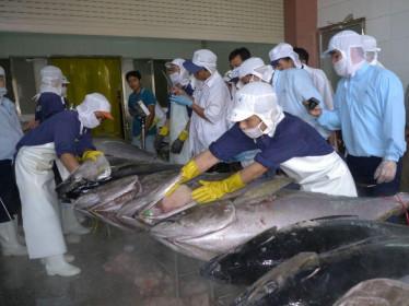 Xuất khẩu cá ngừ sang Mỹ tăng trưởng tốt