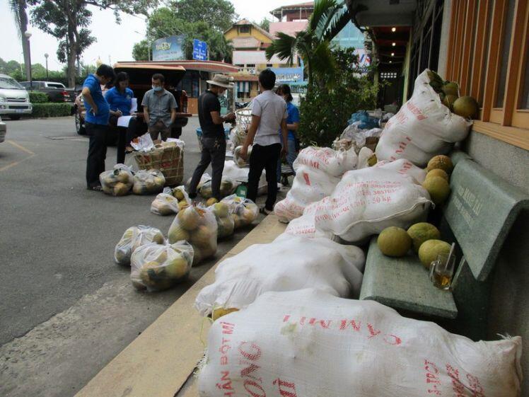 TP.HCM giải cứu bưởi đào đặc sản giá 15.000 đồng/kg