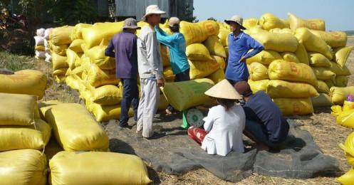 Bangladesh lên kế hoạch mua 50.000 tấn gạo từ Tổng công ty Lương thực Miền Nam