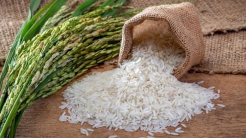 Giá lúa gạo hôm nay 19/3: Giá lúa chững ở mức cao, thị trường giao dịch ổn định