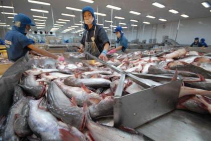Trung Quốc rời 'ngôi vương' nhập khẩu cá tra Việt