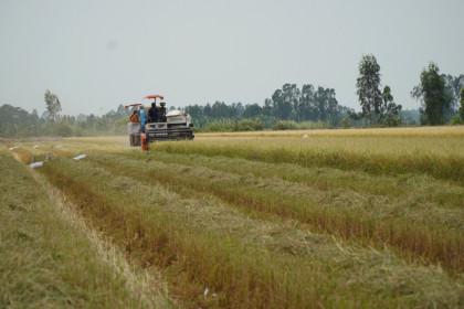 Giá lúa gạo hôm nay 10/4: Giá lúa tiếp tục giảm sâu