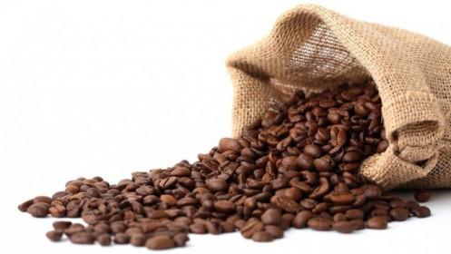 """Giá cà phê hôm nay 11/4: Xuất khẩu cà phê Việt Nam giảm 34,5%; """"Lợi ích kép"""" nâng cao chất lượng từ khâu thu hoạch tại Đắk Lắk"""