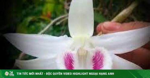 Giao dịch lan đột biến hàng trăm tỷ: Có truy xuất được nguồn gốc hoa?
