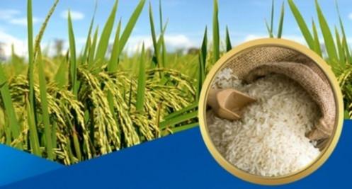 Giá lúa gạo hôm nay 25/4: Cuối tuần giá lúa gạo đi ngang